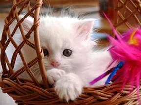 baby cats for cat wallpapers trawel india mails