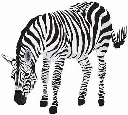 Zebra Clipart Transparent Yopriceville Clip Safari Desenho