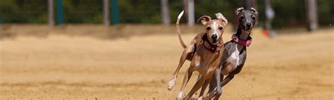 guidelines for greyhound facilities across victoria