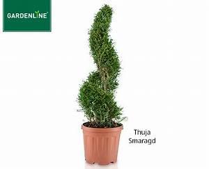 Aldi Solarleuchte Kugel : aldi s d gardenline pflanze im formschnitt ~ Buech-reservation.com Haus und Dekorationen