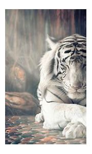 White Tiger Wallpapers - Top Free White Tiger Backgrounds ...