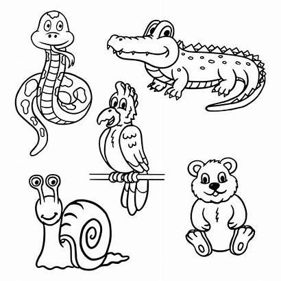 Animals Coloring Vector Animal Wild Clipart Vectors