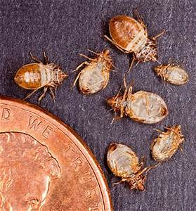 bostonians are becoming bed bug savvy colonial pest control With bed bugs boston