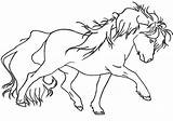 Horse Coloring Miniature Pony Pages Chromatic Creations Adult Gypsy Vanner Embroidery Better Than Thread Getcolorings Draft Printable Velociraptor Dinosaur sketch template