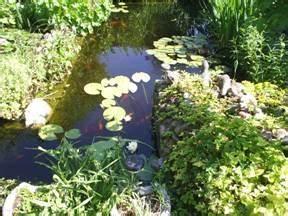 Grünes Wasser Im Gartenteich Hausmittel : gartenteich probleme gr nes teichwasser oder wasserverlust ~ Watch28wear.com Haus und Dekorationen