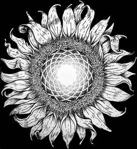 Fibonacci sunflower. My next tattoo...maybe. Ink on paper ...