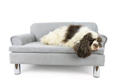 chien canapé canapé pour chien zolia liloe panier et corbeille