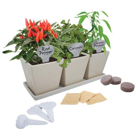 indoor herb garden kit lowes 28 images shop buzzy herb