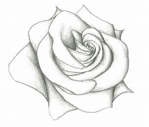 Easy Pencil Drawing Of Rose 12 Model Easy Pencil Drawings ...