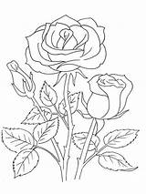Coloring Rose Pages Flower Flowers Tattoo Rosa Roses Printable Colouring Print Drawing Patterns Drawings Books Broderimoenstre Blumen Para Embroidery Colors sketch template