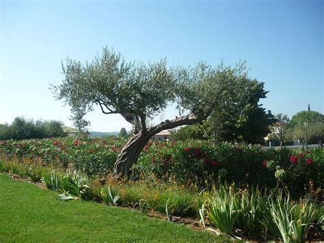 jardin des oliviers la londe les maures 83250 var 83