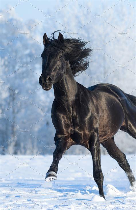 running horse fast galoppo purebred cavallo stallion nero gallops galop paard sang lopen stallone dog gallop het snow immagine rasechte