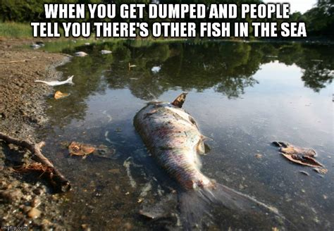 Fish In The Sea Meme - image tagged in fish imgflip