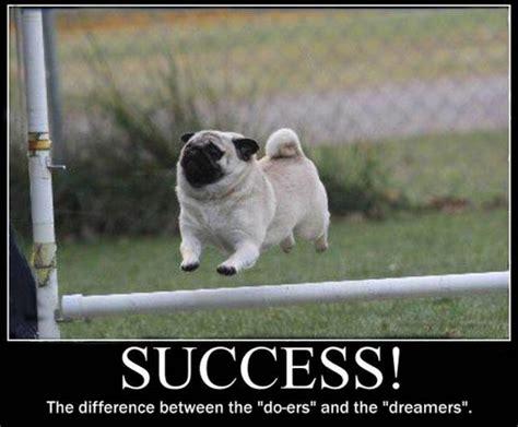 Dog Memes Funny - funny animal memes 2016 image memes at relatably com