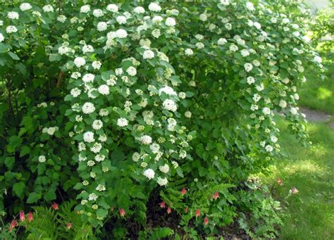 17 Best Images About Long Island Native Plants On