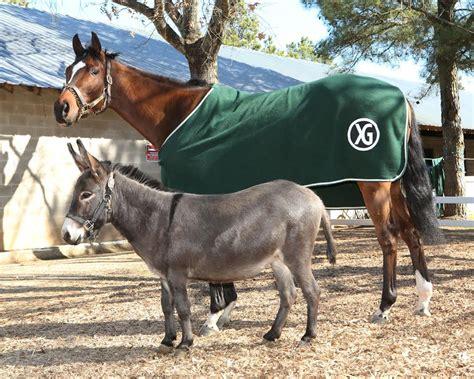 donkey thoroughbred companion dazzled buddy fergie barn boon gaining status celebrity cant kyforward coady nkytribune dazzle