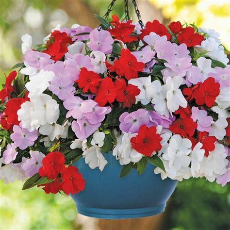 plante en pot exterieur plein soleil plantes retombantes 224 fleurs et vivaces pour un ext 233 rieur fleuri