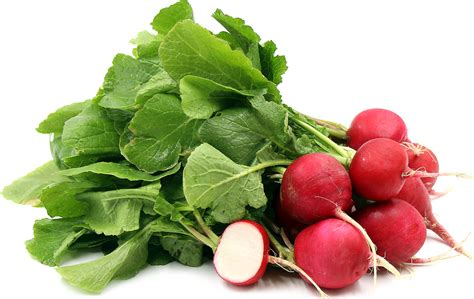 what is radish red radish information recipes and facts