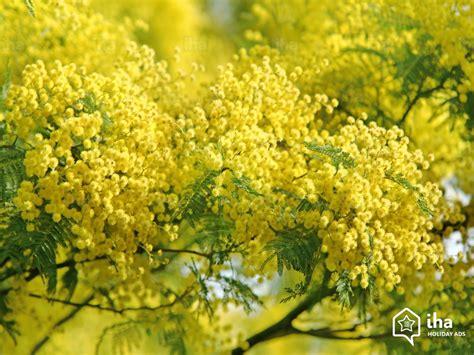 chambre d hotes provence alpes cote d azur location bormes les mimosas dans une chambre d 39 hôte avec iha