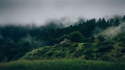 Forest Fog 8k 4k Mac 5k Mist
