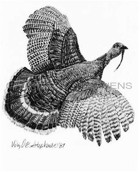 turkey arizona big ten game animals pencil drawing