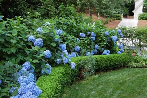 Do You Winter Gardening Blues by Hydrangeas How To Prune Them Hgtv