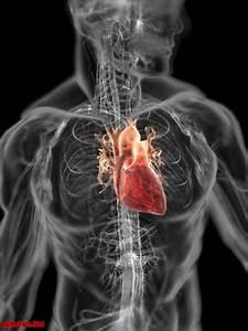 Anatomy Of A Human Body  Zooom Inside
