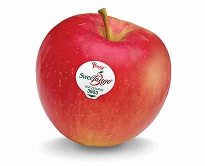 Sweetango Fruit Apple Apples Sweet Tango Nz