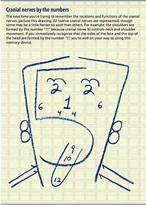 Learning The Cranial Nerves