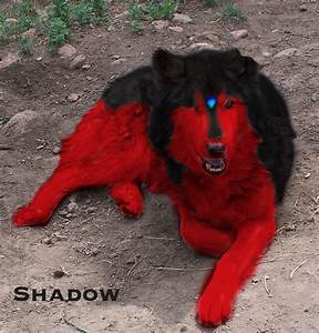 ShadoWolfDemon (Smifficus Maximus)