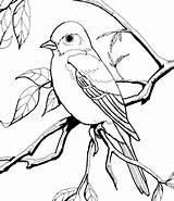 Coloring Bluebird Sheet Template Sheets Flying Bird Printable Templates Preschool Printables Books sketch template