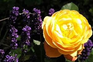 Rosen Und Lavendel : lavendel und rosen orf salzburg fernsehen ~ Yasmunasinghe.com Haus und Dekorationen