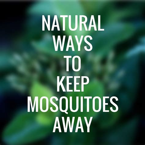 how to keep away mosquitoes from home all natural ways to keep mosquitoes away