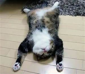 Exhausted Cat | www.pixshark.com - Images Galleries With A ...