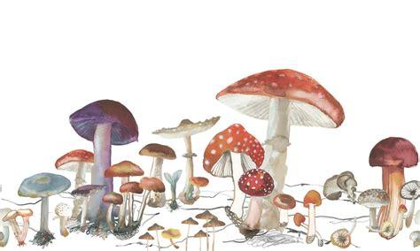 woods of stuffed mushrooms wallpaper mural