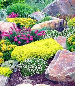 Steinbeet Pflanzen Winterhart : steingarten mix happy flowers 4 pflanzen g nstig online ~ Watch28wear.com Haus und Dekorationen