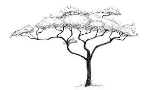 outline drawings  african thorn trees google search