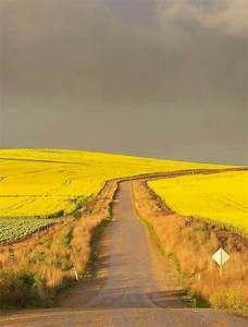 Clare, Valley, South, Australia