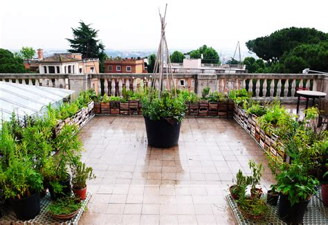Roman rooftop Edible Estate in June