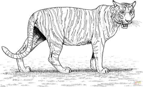 disegni da colorare uomo tigre disegni uomo tigre da colorare con disegno di maschera