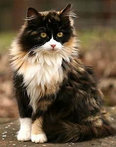 21 Cats With The Most Unique Fur Patterns Ever
