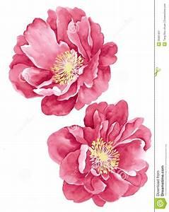 The 25+ best Flower illustrations ideas on Pinterest ...