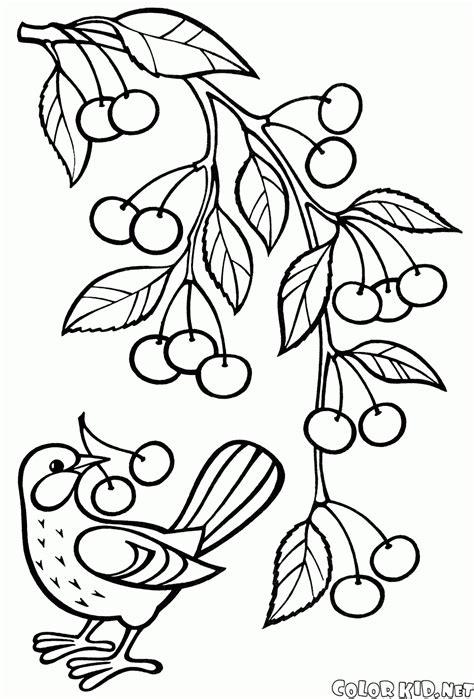 dibujo  colorear frutas