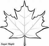Leaf Coloring Printable Pages Leaves Fall Template Maple Sheets Clipart Printables Makinbacon Hubpages Northern sketch template