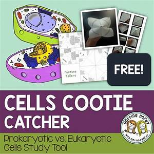 Cell Structure  Catcher And Question And Answer On Pinterest