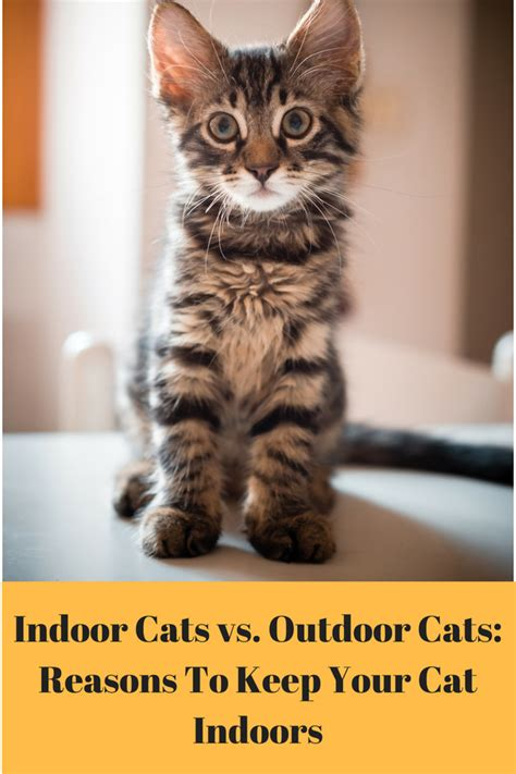 indoor cats vs outdoor cats reasons to keep your cat
