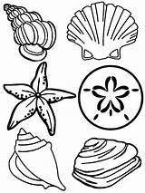 Seashells Cartoon Colouring Clipart Clipartbest Coloring Seashell Shells Sea sketch template