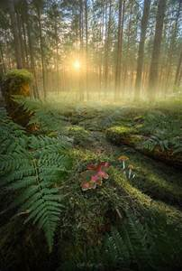 enchanted on Tu... Forest Floor Quotes