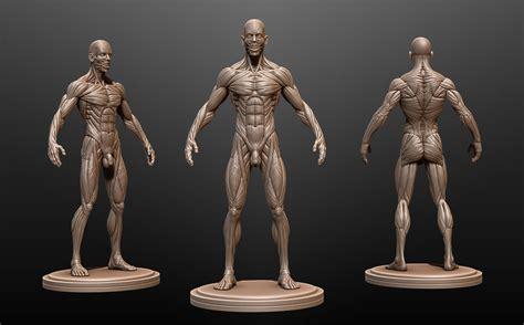 Male Anatomy Ecorche 3d Model Obj Ztl