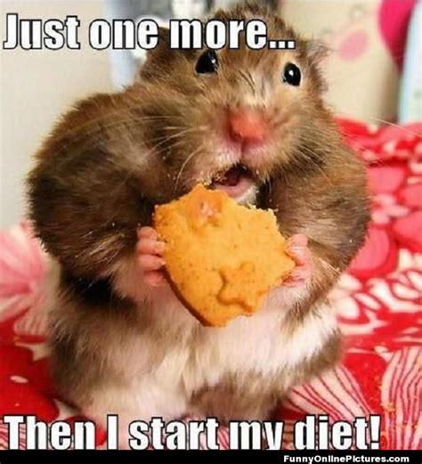 Hamster Meme - funny hamster memes the best hamster memes online